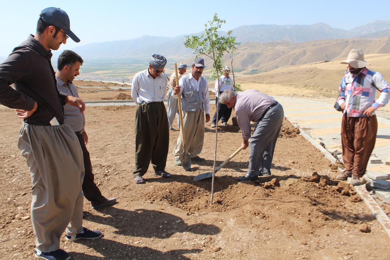 آغاز کاشت درخت در پارک نوروز توسط فضای سبز شهرداری پیرانشهر